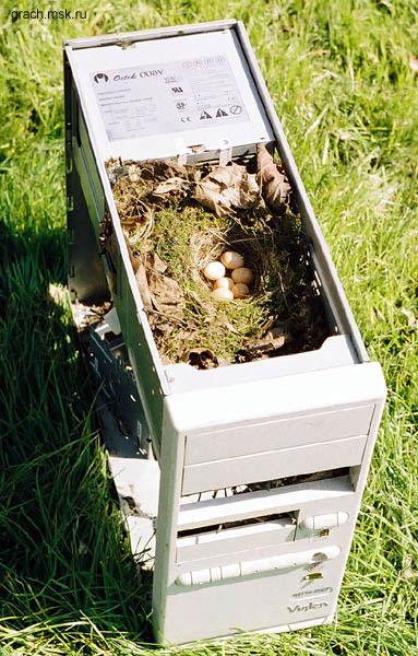 Компьютер - гнездо.