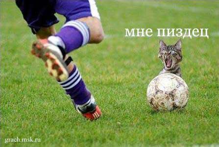 Почему кошки не любят футболистов...