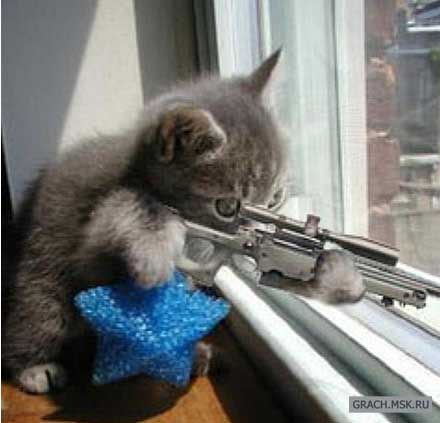 Кот такой снайпер